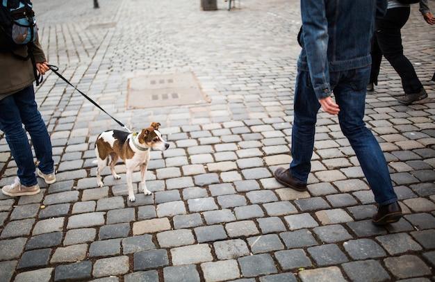 Homem anda com um cachorro no centro da cidade. cachorro solitário, com belos olhos, olha para os transeuntes em uma praça na alemanha