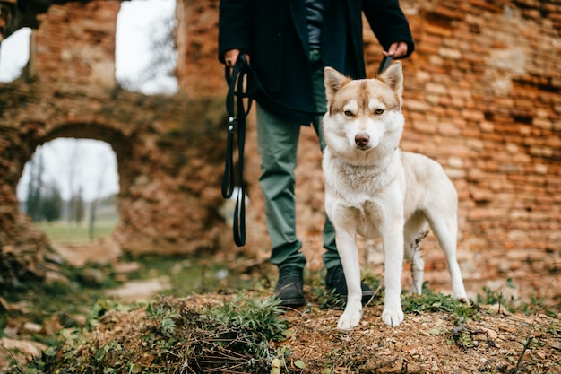 Homem andando cachorrinho husky além das paredes de tijolo.