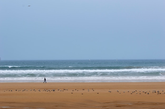 Homem andando em uma praia com gaivotas. no fundo o mar com ondas.