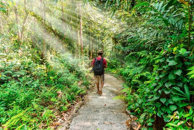 Homem andando na floresta com raio de sol