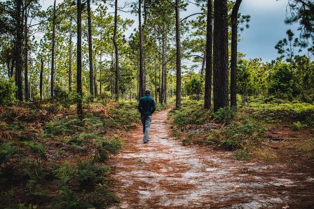 Homem andando no caminho na floresta de pinheiros, parque nacional phu kradueng, tailândia