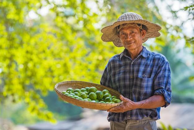Homem asiático agricultor sênior com limão verde, homem asiático agricultor no espaço vazio da cópia