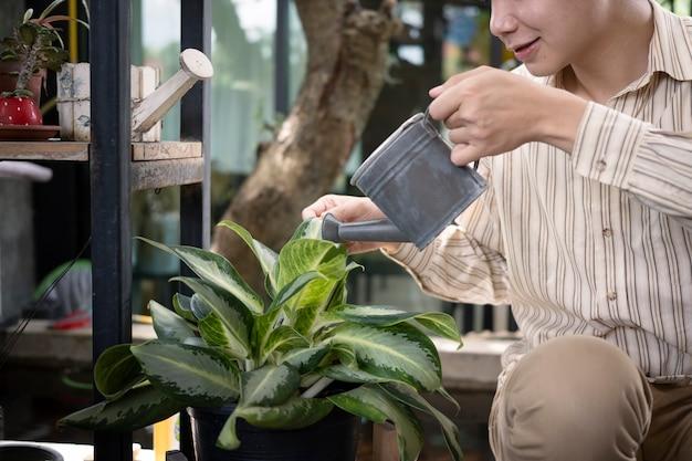 Homem asiático sorridente, jardinagem e rega a planta em casa.