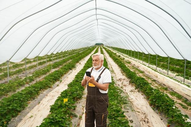 Homem barbudo maduro de macacão marrom em pé na estufa com um telefone celular moderno nas mãos. agricultor competente usando smartphone para controlar o crescimento de arbustos de morango.
