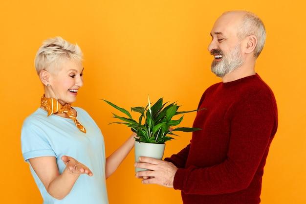 Homem bonito sênior alegre em camisa e colete segurando o pote dando planta de casa para sua atraente esposa no aniversário. feliz aposentado homem e mulher cultivando flores juntos em casa, posando isolados