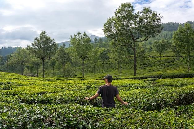 Homem caminha pelas plantações de chá nas montanhas da noiva em chá verde e admira. turista em munnar kerala índia.