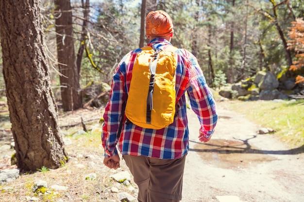 Homem caminhadas baía a trilha na floresta.