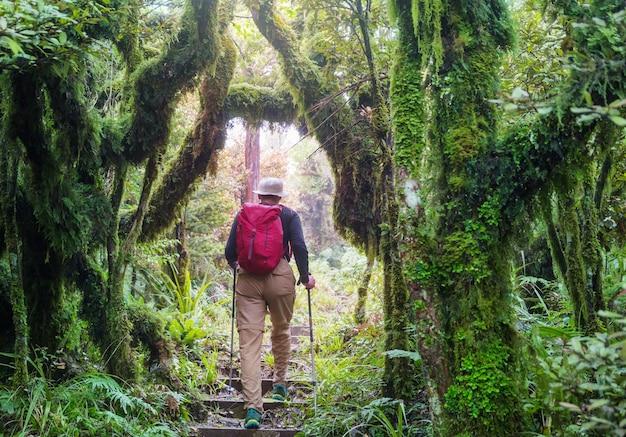 Homem caminhando pela trilha na floresta. caminhada para lazer na natureza ao ar livre