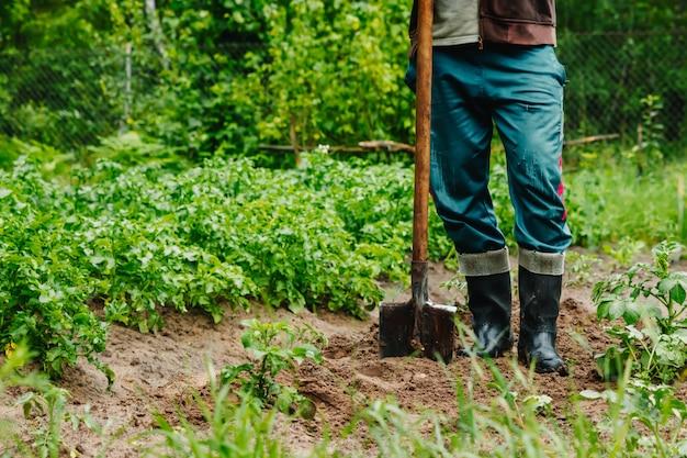 Homem cava um buraco no chão para plantar árvores