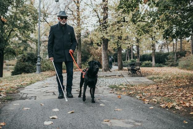 Homem cego maduro com uma longa bengala branca, caminhando no parque com seu cão-guia.