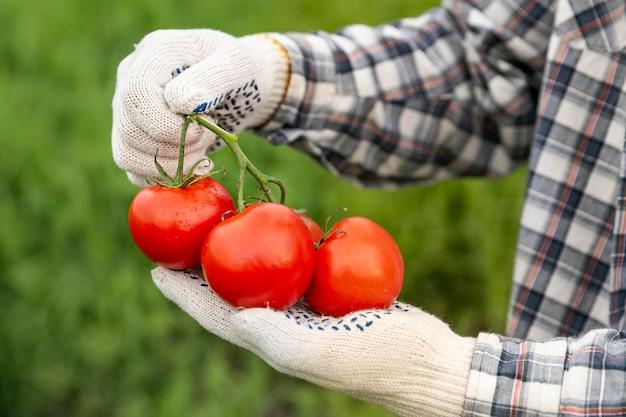 Homem close-up com tomates