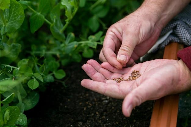Homem close-up, segurando sementes, em, mãos