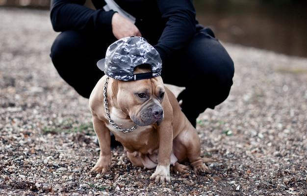 Homem com cão de estimação funny american bully em um boné na natureza