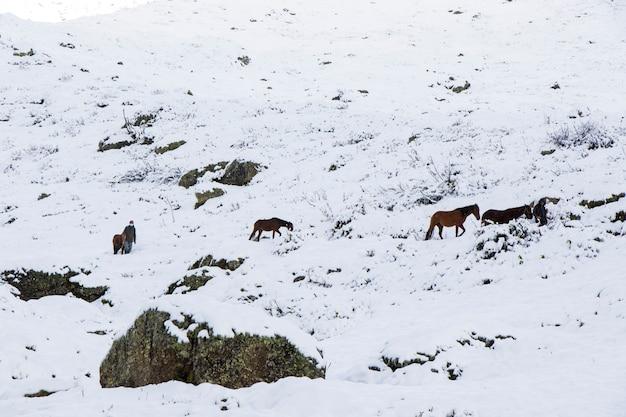 Homem com cavalos na neve nas montanhas da geórgia