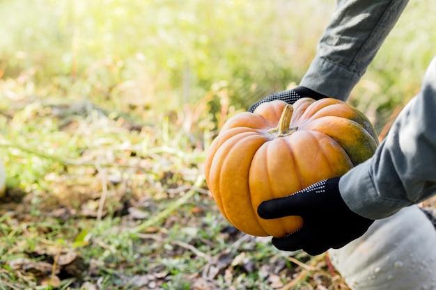 Homem com luvas detém uma abóbora amarela no campo ao pôr do sol na época da colheita de outono. remendo de abóbora. símbolo de ação de graças feliz e halloween. copie o espaço.