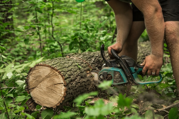 Homem com uma serra elétrica corta a árvore
