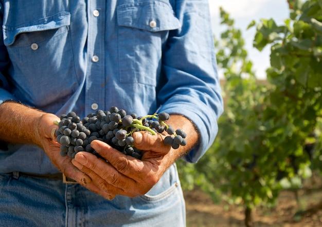 Homem, com, uvas, em, seu, mãos