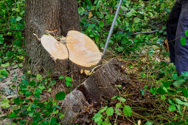 Homem corta árvore com motosserra, conceito de desmatamento.