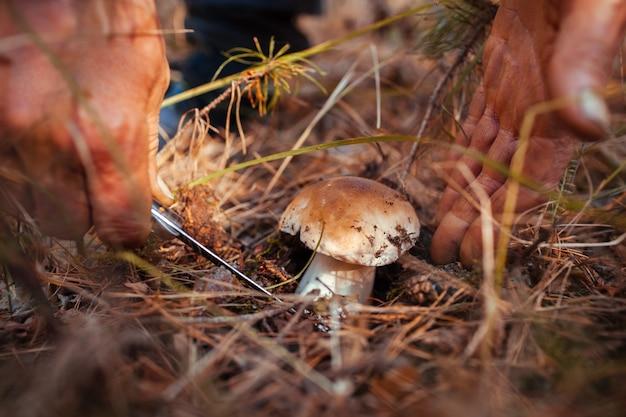 Homem cortando o cogumelo porcini na floresta de outono. estação de coleta de cogumelos