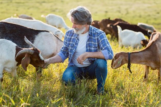 Homem de alto ângulo no meio de cabras
