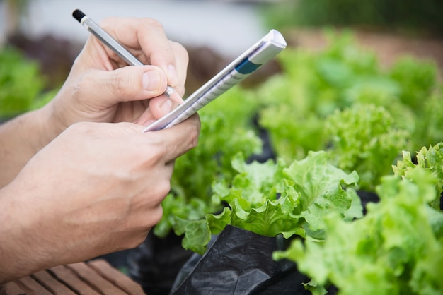 Homem de fazenda trabalhando em seu jardim de alface orgânico