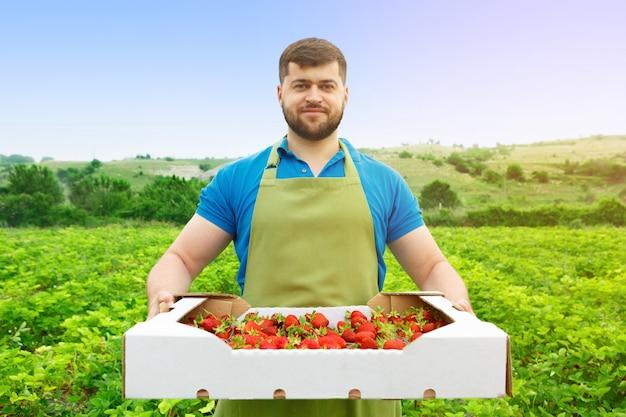 Homem de meia idade barbudo em pé em um campo de morango com uma caixa de morangos frescos