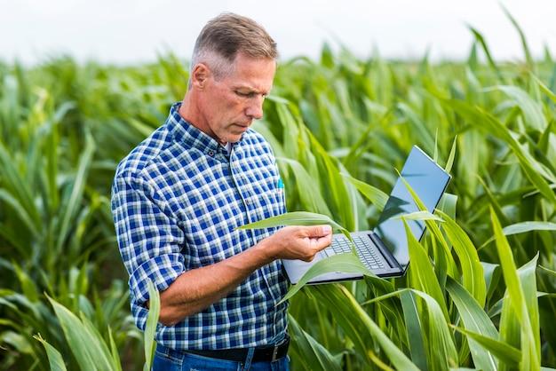 Homem de visão do meio inspecionando uma folha de milho