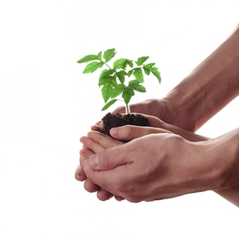 Homem e criança que guardam o solo com plântula do tomate. família, jardinagem e conceito de proteção ambiental.