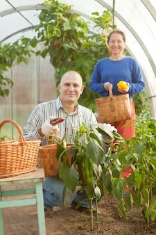 Homem e mulher em vegetais