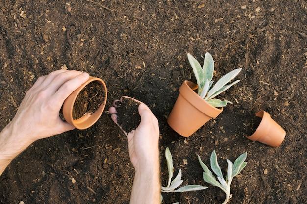 Homem, enchendo, flowerpots, com, solo