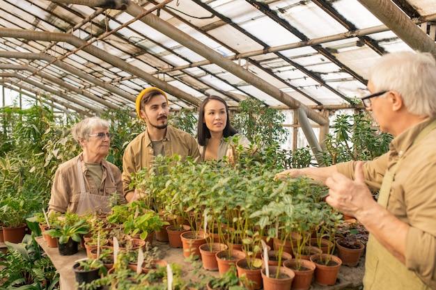 Homem experiente em pé à mesa e explicando aos trabalhadores da estufa como trabalhar com plantas jovens