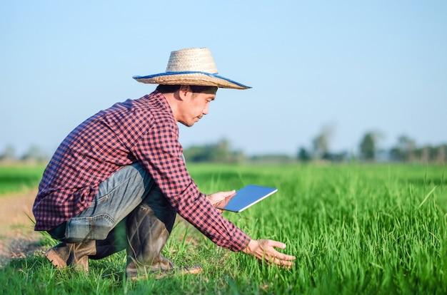 Homem fazendeiro asiático sentado e usando um tablet em uma fazenda de arroz verde