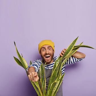 Homem feliz cultiva flores em casa, olha através das folhas verdes de sansevieria, aponta para a distância