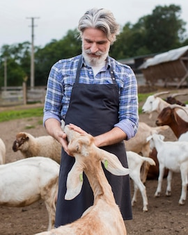 Homem idoso alimentando cabras