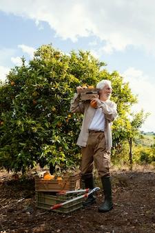 Homem idoso cultivando laranjas
