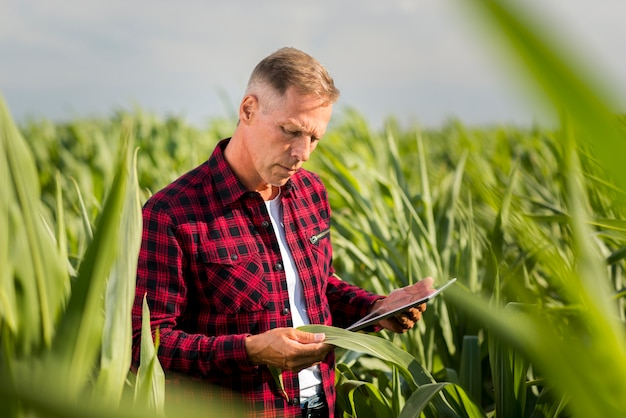 Homem inspecionando atentamente uma folha de milho