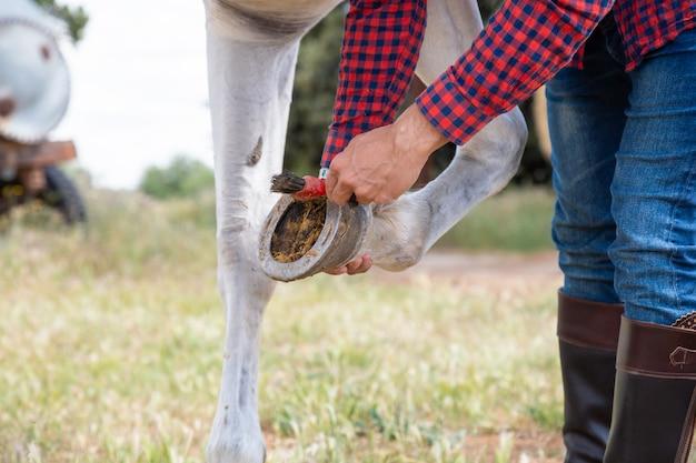 Homem jovem anônimo em roupa casual, usando o pincel para remover a grama e a sujeira da ferradura do cavalo branco no prado