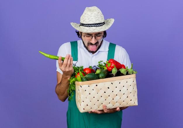 Homem jovem jardineiro barbudo vestindo macacão e chapéu segurando uma caixa cheia de vegetais segurando pimenta malagueta picante com a língua de fora em pé sobre a parede azul