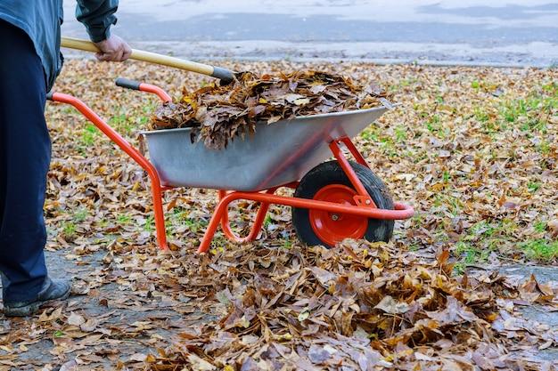 Homem limpando folhas caídas de outono em um carrinho de mão