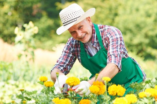 Homem maduro cortando flores no jardim