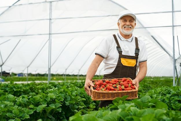 Homem maduro positivo carregando uma cesta com morangos frescos