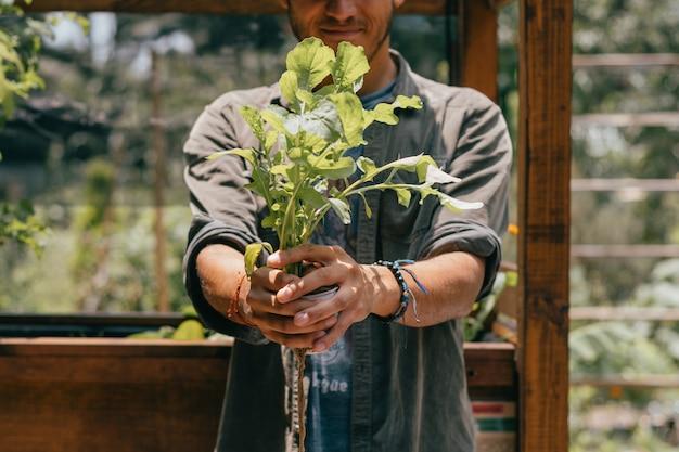 Homem mostrando uma alface cultivada em hidroponia