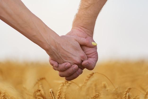 Homem mulher, segurar passa, em, campo trigo maduro