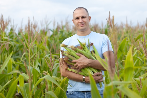Homem no campo de milho com espigas de milho