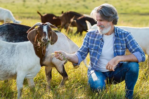 Homem parado no meio de cabras