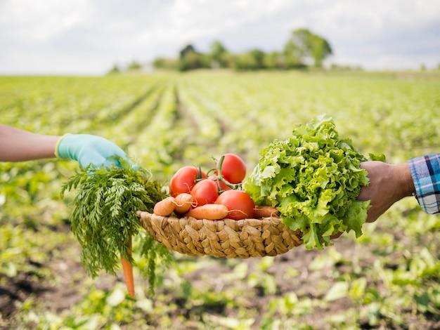 Homem passando uma cesta cheia de legumes para uma mulher