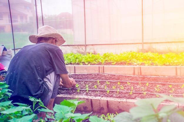 Homem pessoa, segurando, abundância, solo, com, planta seedling, em, mão, em, jardineiro