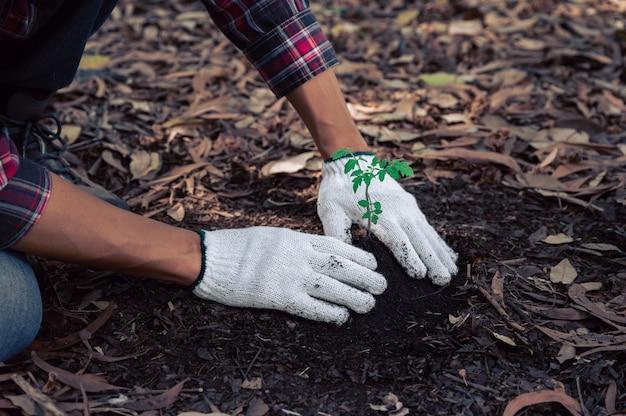 Homem planta muda de árvore na floresta