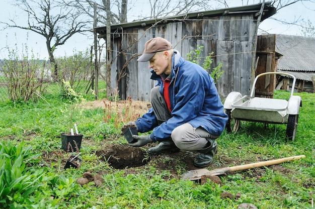 Homem plantando blueberrie em um jardim