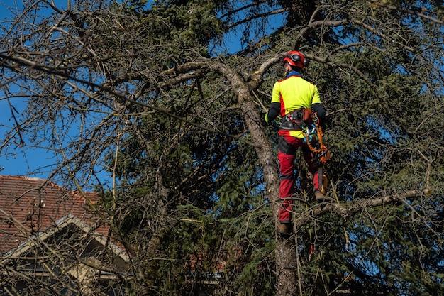 Homem podando copas de árvores usando uma serra, lenhador usando equipamento de proteção e serrando galhos.